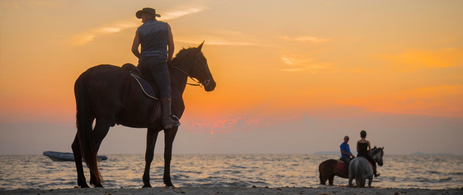 Horse Sharing: Il tuo cavallo, quando vuoi tu